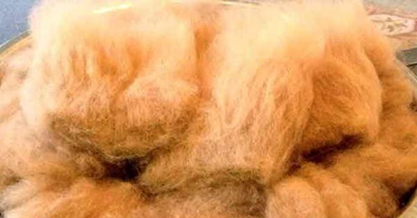 From alpaca fleece to yarn
